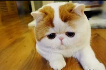 宝宝心里苦但宝宝不哭图片宝宝委屈但宝宝不  委屈巴巴猫表情包图片